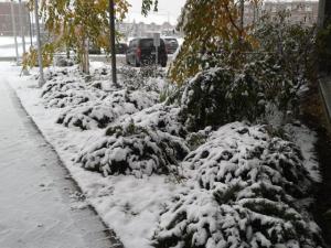 first-snowfall-1